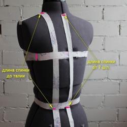 длина спинки до талии