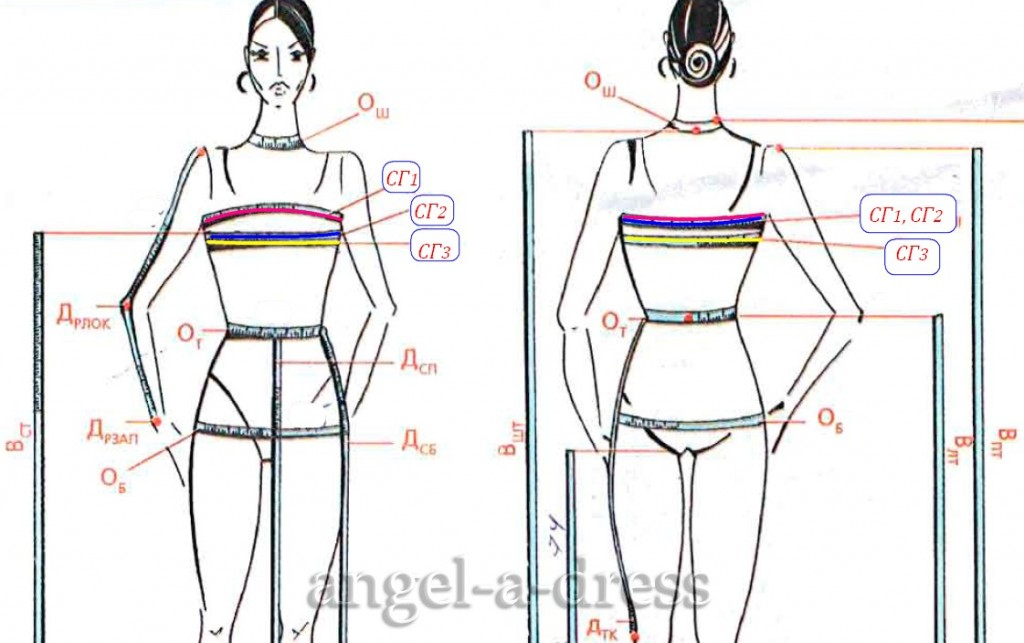 измерение Обхватов груди